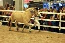 2015 Int Horse Show Sweden_2