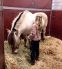 2015 Int Horse Show Sweden_4