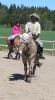 2015 Int Horse Show Sweden_9